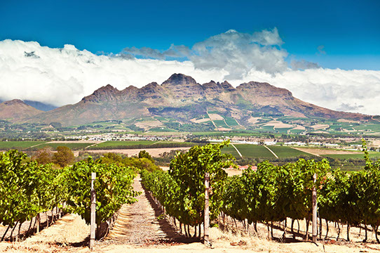 Experience one of the many Wine Estates in South Africa with TripGift