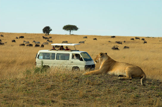 Experience an amazing Safari adventure with TripGift
