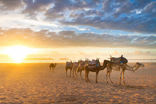Enjoy a traditional evening camel ride through the desert with TripGift