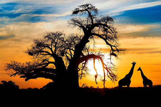 Experience breathtaking scenery whilst on Safari with TripGift